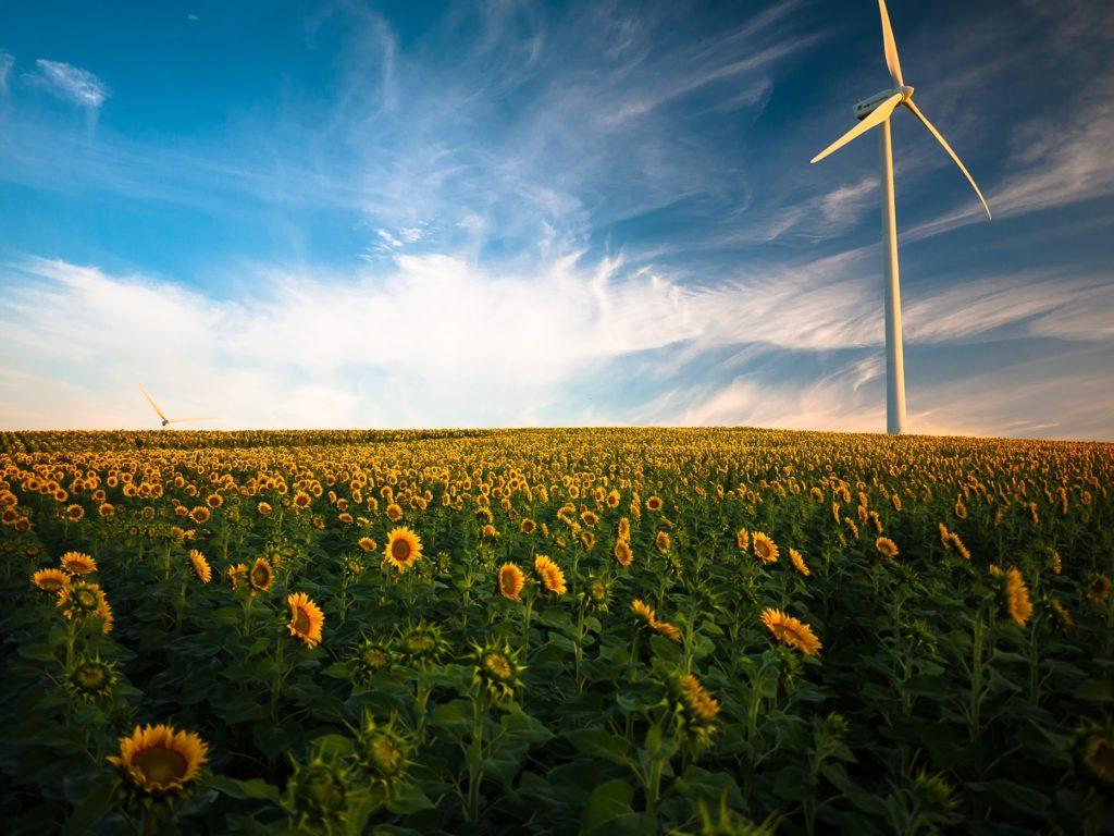 De zonnebloemen staan symbool voor meer energie
