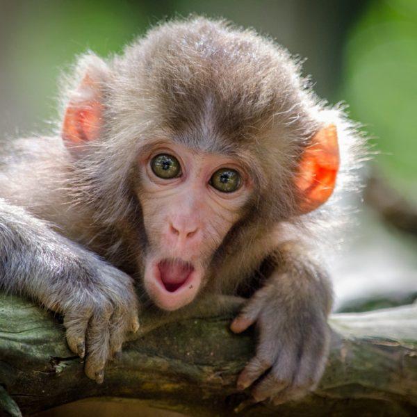 Monkeymind piekeren